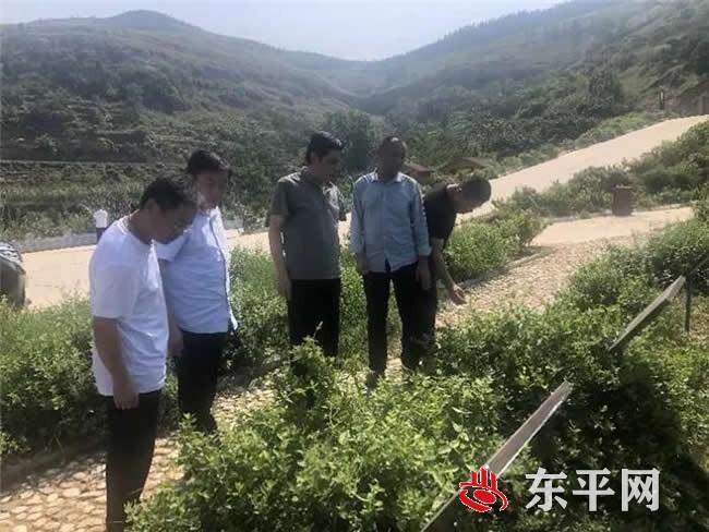 接山镇赴平邑县考察学习金银花产业